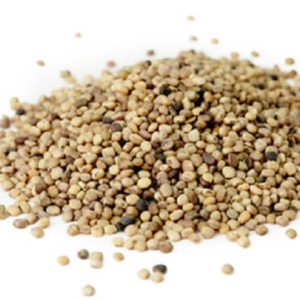 Guar-Seeds-Exporters-From-Pakistan